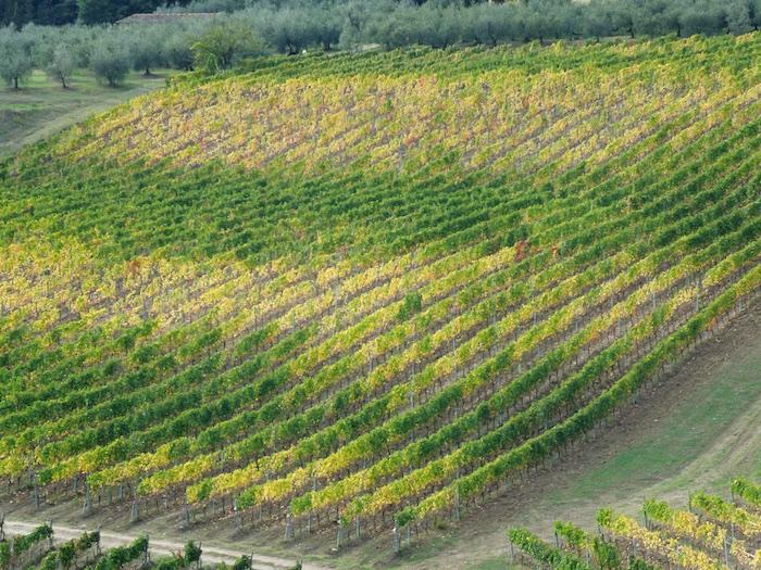 herfst-wijngaarden-toscane-1