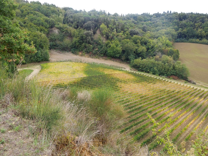 herfst-wijngaarden-toscane-4