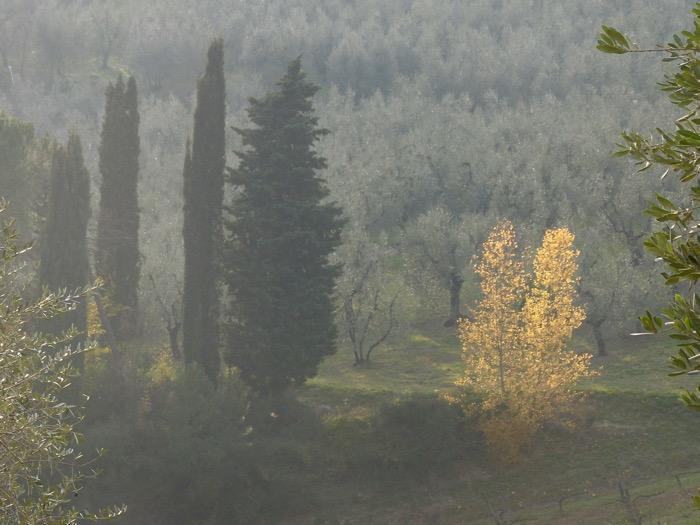 wandeling-toscane-dec-2015- - 1