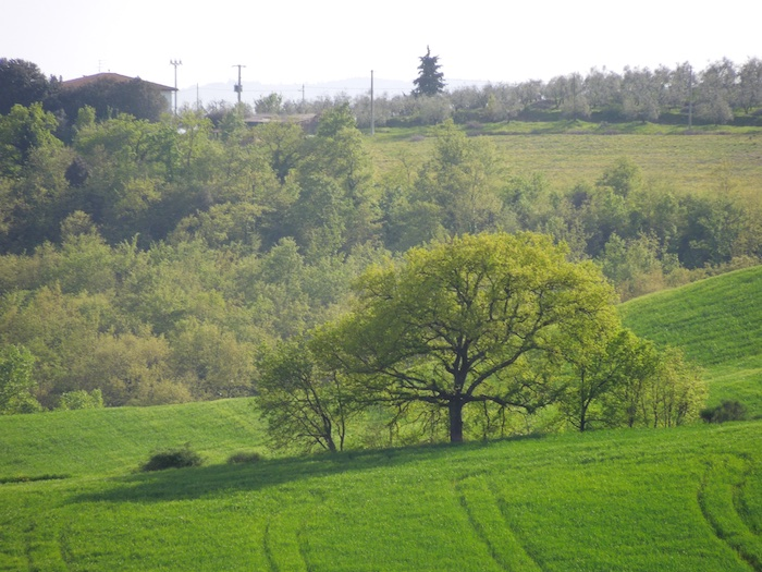 wandelen-toscane-lente-4