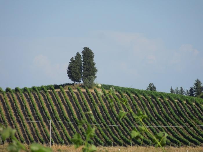 wijngaard-toscane
