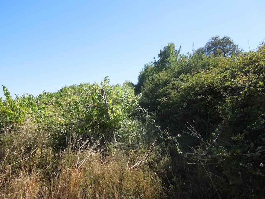 olijfboomgaard-opknappen-1a