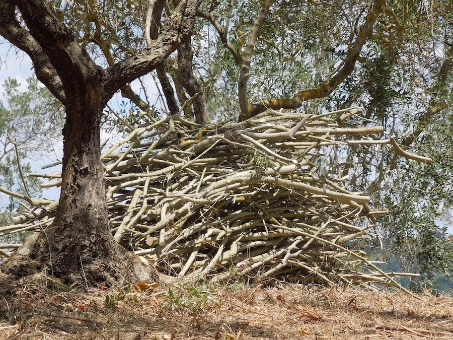 olijfboomgaard-opknappen-6