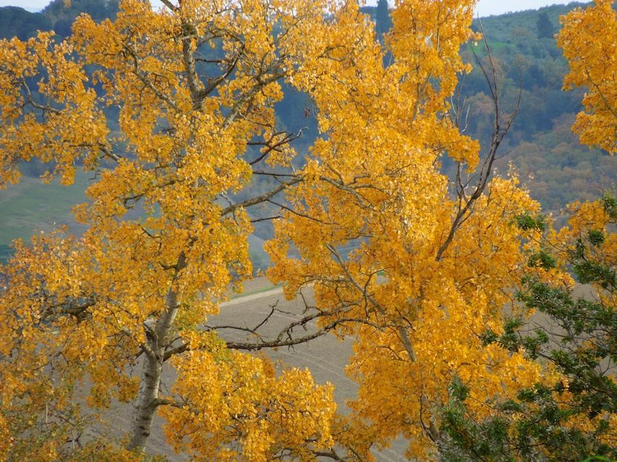 herfst-toscane-1