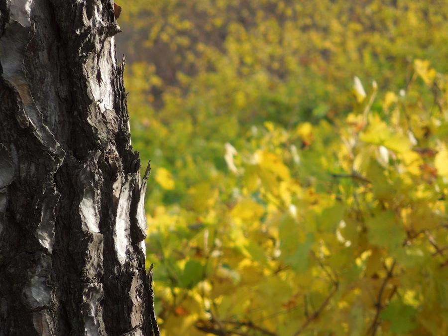 herfst-toscane-3