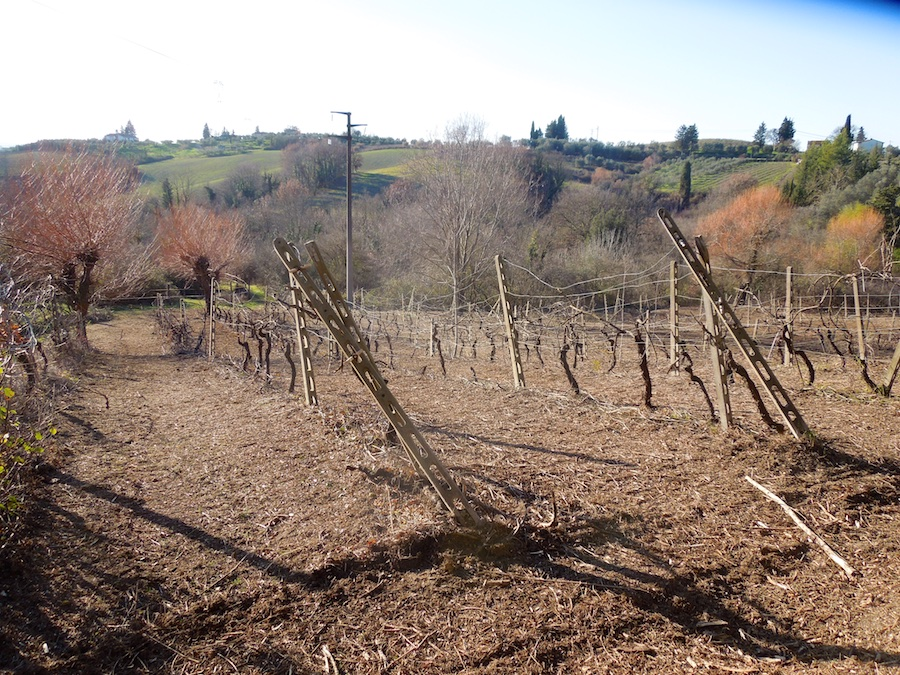 wijngaard-toscane-4